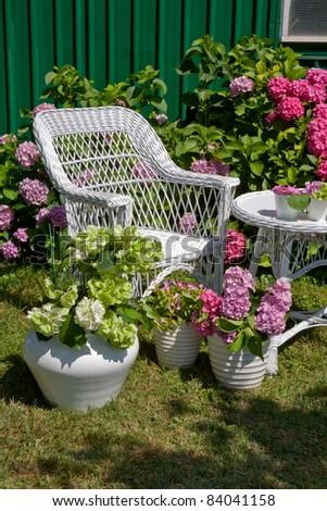 Hydrangea garden - stock photo