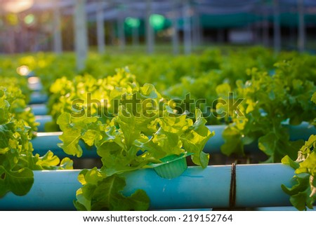 hydroponic farm in sunset - stock photo