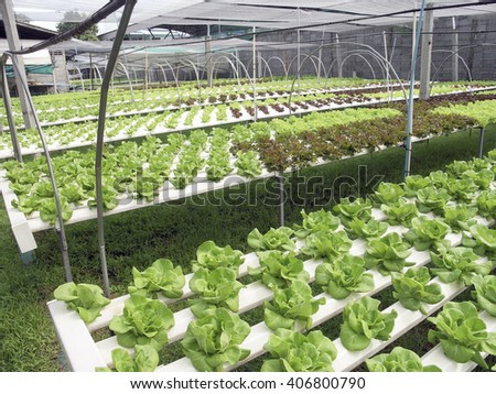 Hydroponic lettuce vegetables plantation in aquaponics system - stock photo