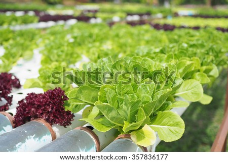 Hydroponic vegetable farm.