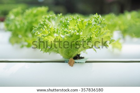 Hydroponic vegetable farm. - stock photo