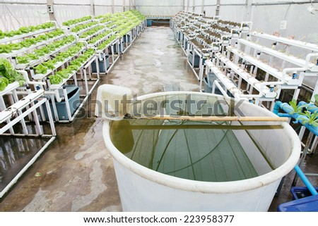 Hydroponic vegetable planting indoor farm