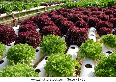 Hydroponic vegetables growing system. Growing plants without soil.