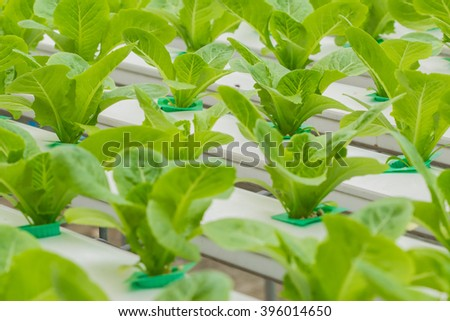 Hydroponics method of growing plants .
