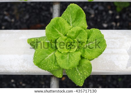 an analysis of hydroponics growing plants without soil In layman's terms, hydroponics is the science of growing plants without soil--  although the plants may or may not be suspended in a solid medium such as  gravel.