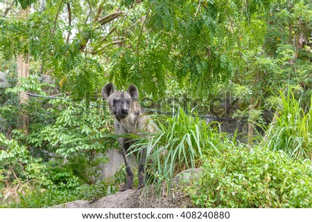 Hyena sit in a park