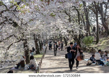 HYOGO, JAPAN - APRIL 13, 2011: Visitors came to enjoy blooming Sakura during Hanami, the Cherry blossom celebration, in Shukugawa Park, Hyogo, Japan. There are about 1660 cherry trees in the park. - stock photo