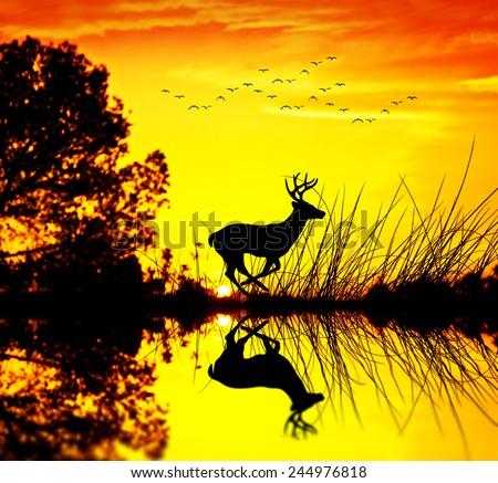 I deer running along the lake - stock photo