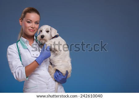 I love animals, choose the right profession for you. A young female vet holding an adorable dog and smiling at camera against blue background - stock photo