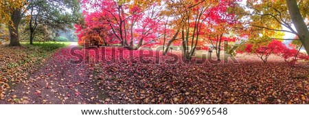 I love autumn. Falling autumn red leaf on the ground. Color of autumn in Netherlands Holland
