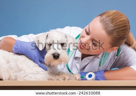 I love my job. Portrait of a young beautiful vet looking at camera and cute white dog isolated on blue background - stock photo