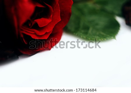 I love you hand drawn text and roses. Love concept. - stock photo