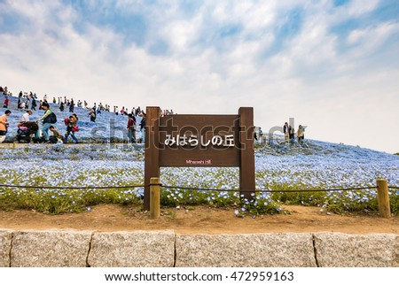 Ibaraki, Japan - May 1, 2016: Miharashi hill at Hitachi Seaside Park. Hitachi Seaside Park is a spacious park in Ibaraki Prefecture, Japan featuring a variety of green spaces and seasonal flowers.