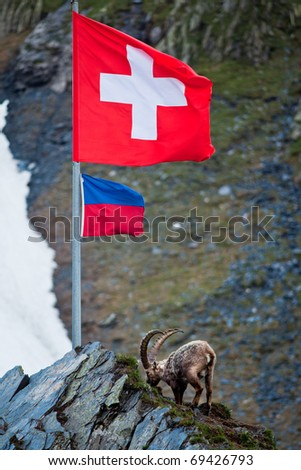 ibex on rock under swiss flag - stock photo