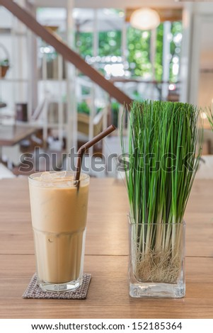 Ice coffee with plant on coffee shop - stock photo