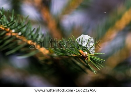 Ice Covered Christmas Tree 1. Diamonds are forever! Closeup view of a spruce tree branches covered with bits of snow and ice. Ice is glowing like a diamond. The real treasure of Christmas holidays. - stock photo