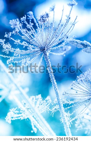 Ice covered plant close-up - stock photo
