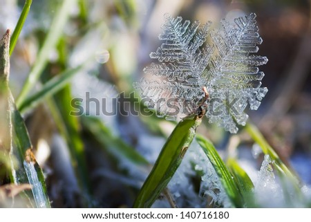 ice crystal of hoarfrost on a grass - stock photo