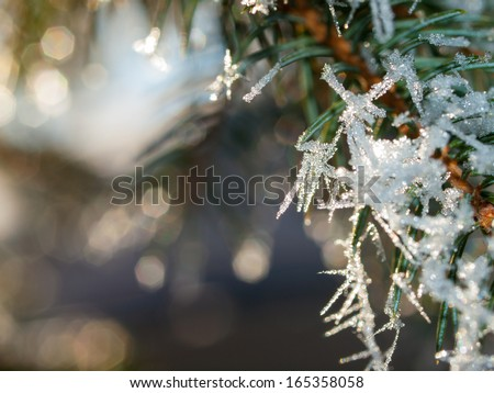 Ice Crystals on Pine Tree Branches in Winter  - stock photo