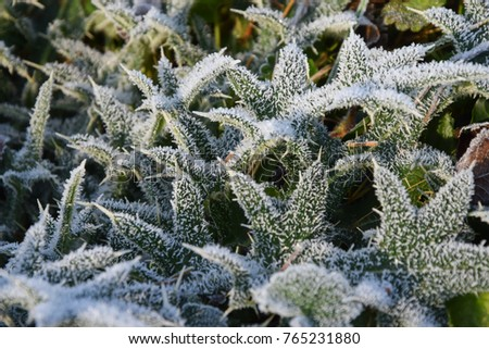 Ice frost on leaves in winter background