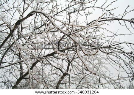 Ice on branches of a tree in the winter, Moscow Region, Russia