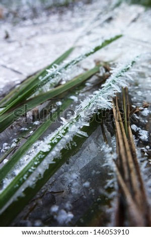 ice pikes on the grass