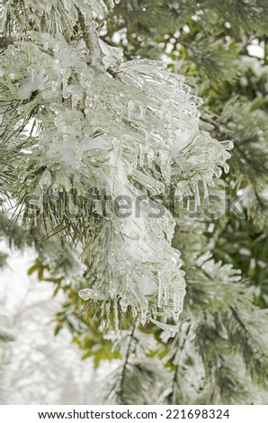Ice surrounds the branches of ornamental trees during a winter snow and freezing rain storm - stock photo