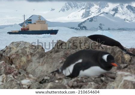 icebreaker sailing on the scored ice Antarctic Strait near the penguin colony spring day - stock photo