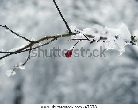 iced berry - stock photo