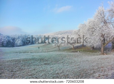 Iced trees in a winter landscape