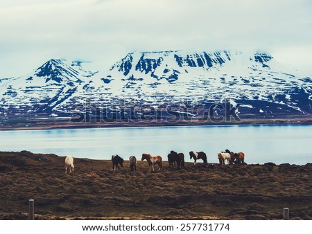 Iceland nature landscape with horses and lake river  - stock photo