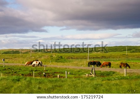 Icelandic horses grazing along the old road against cloudy sky background - stock photo