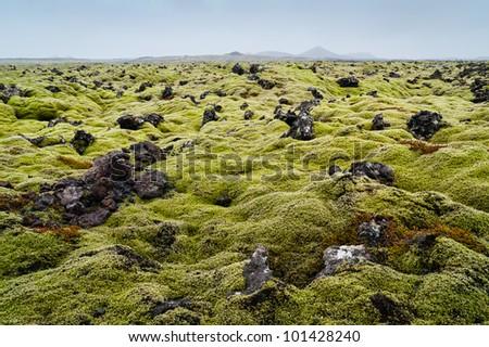 Icelandic moss covers volcanic rock - stock photo