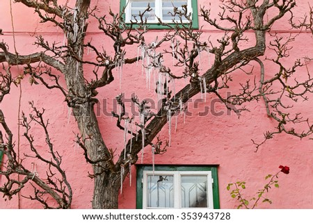 Icicles, freezing of dripping water, hanging on a tree in front of a pink house - stock photo