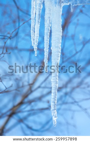 Icicles on a background of blue sky. The coming of spring. - stock photo