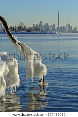 Icicles on the tree branch near lake Ontario. - stock photo