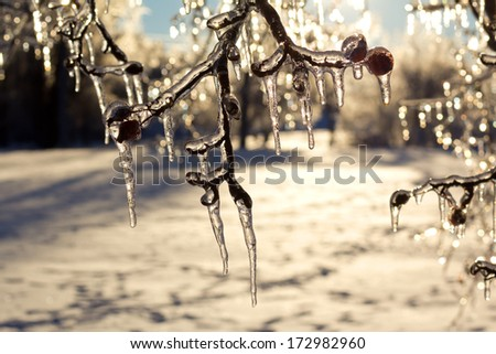 Icicles on trees after an extreme ice storm. - stock photo