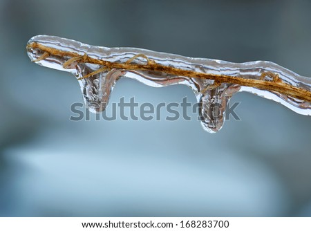 Icicles on twig formed during a freezing rain - stock photo