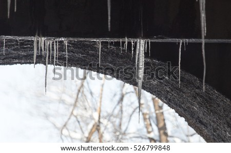 icicles on winter nature