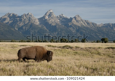 Iconic view of the old west - stock photo