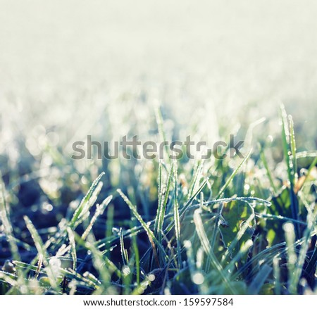 Icy grass  - stock photo