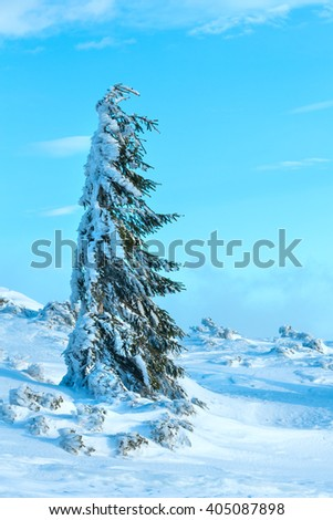 Icy snowy fir tree on winter morning hill.  - stock photo