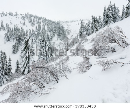 Icy snowy fir trees and bushes on winter hill in cloudy weather.  - stock photo