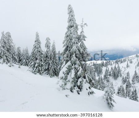 Icy snowy fir trees on winter hill in cloudy weather (Carpathian). - stock photo