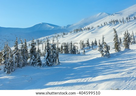 Icy snowy fir trees on winter morning hill (Carpathian). - stock photo