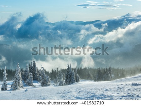 Icy snowy fir trees on winter morning hill in cloudy weather (Carpathian). - stock photo