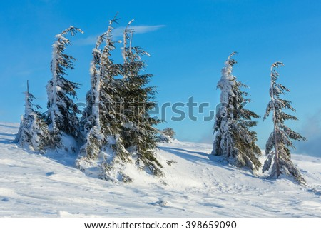 Icy snowy fir trees on winter morning slope.  - stock photo