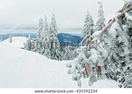 Icy snowy twig of fir tree with cones in front and winter mountain scenery. - stock photo