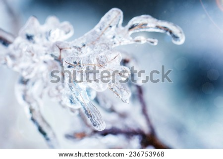 Icy tree branches after freezing rain - stock photo