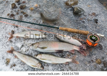 Idaho steelhead trout - stock photo